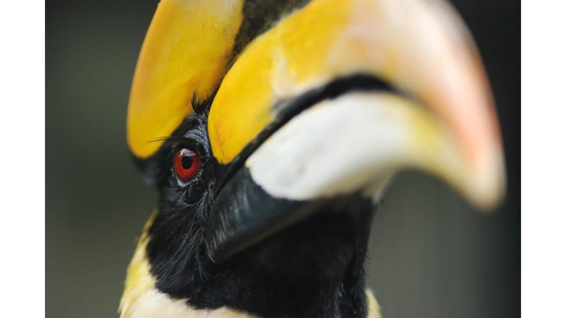 Parc aux oiseaux de Kuala Lumpur