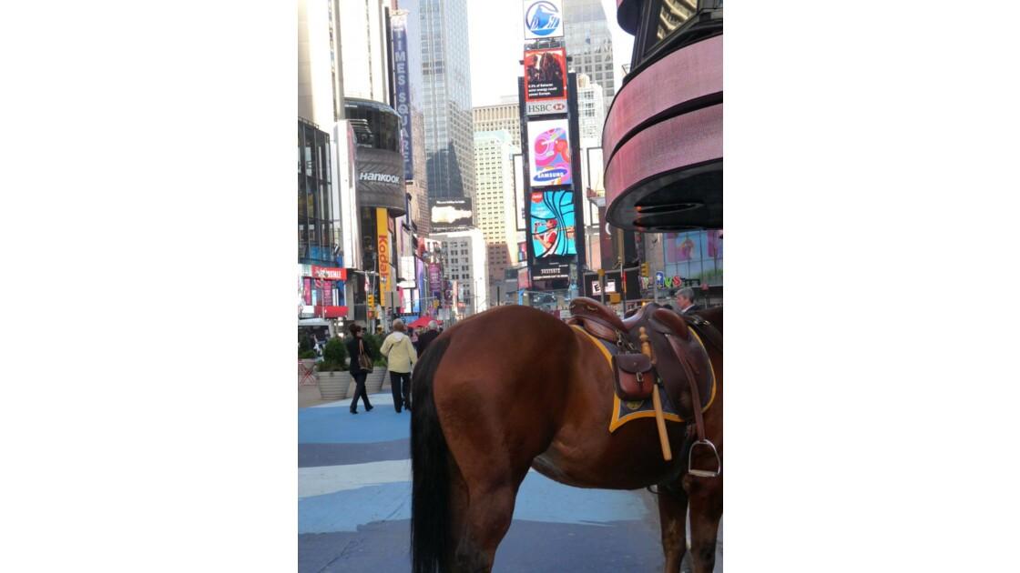 Un cheval à Time Square