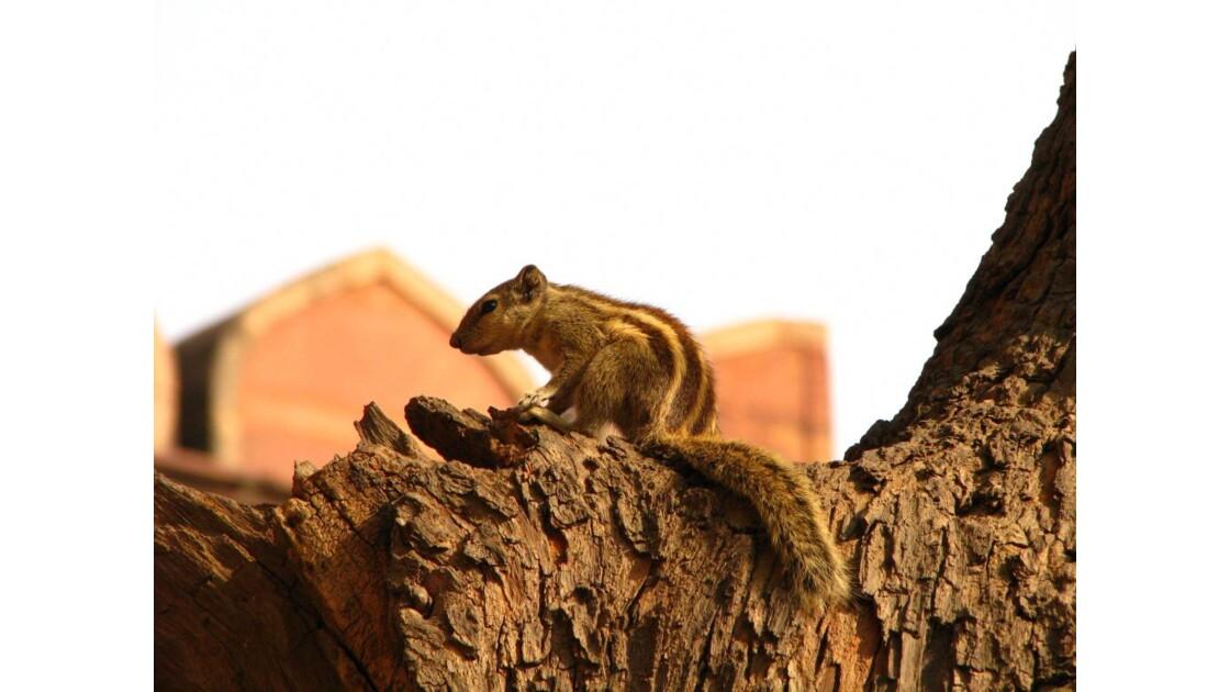 mignon petit écureuil