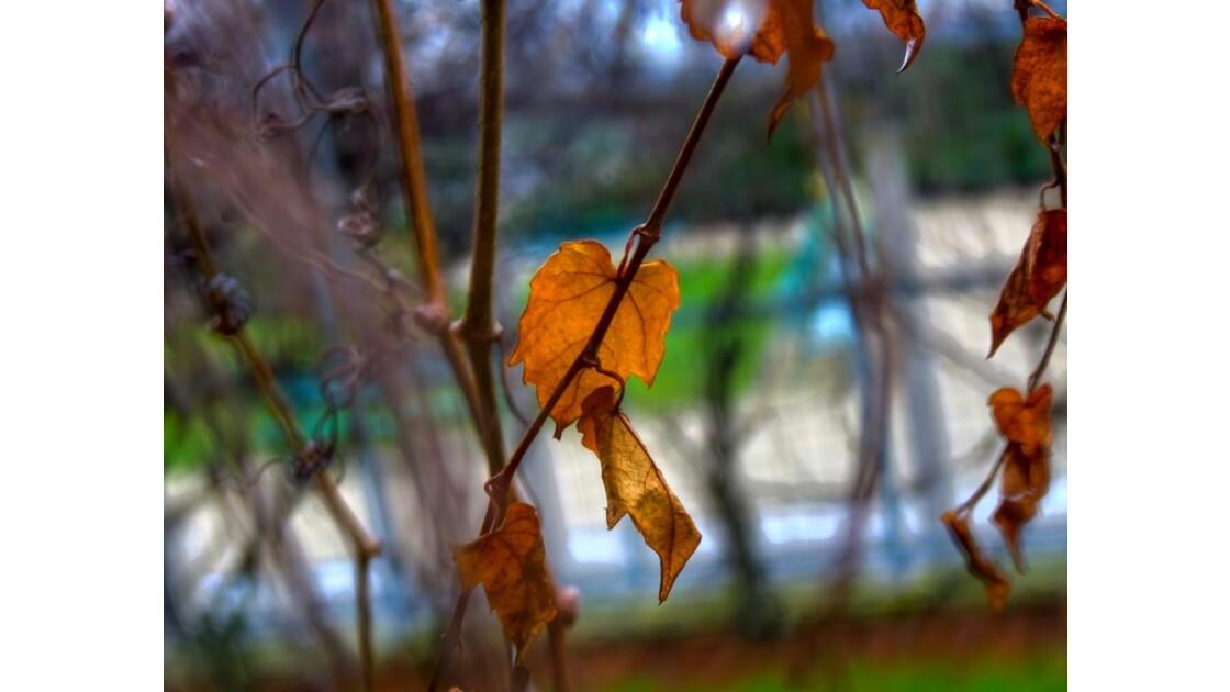 fin d'automne.. debut d'hiver