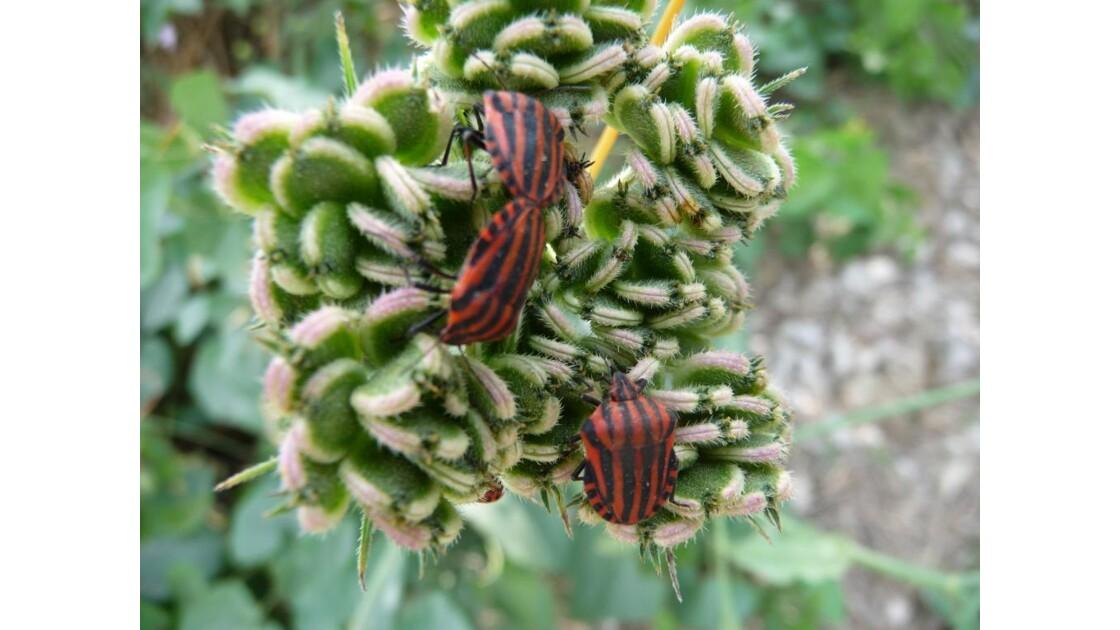 insectes sur une plante