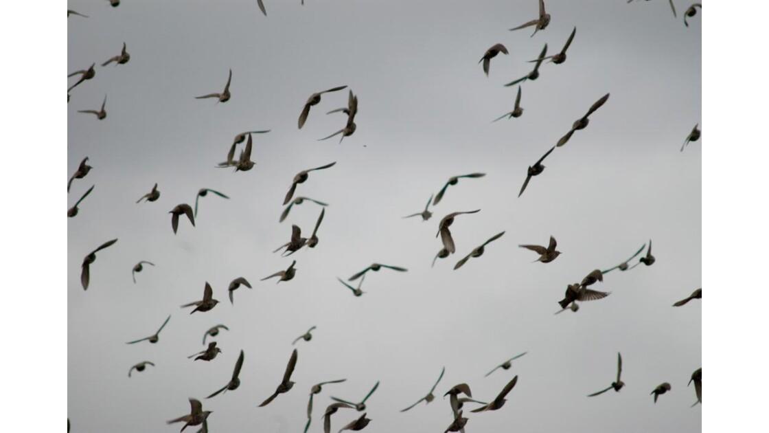 """Noisy-le-Grand  """"Les Oiseaux"""""""
