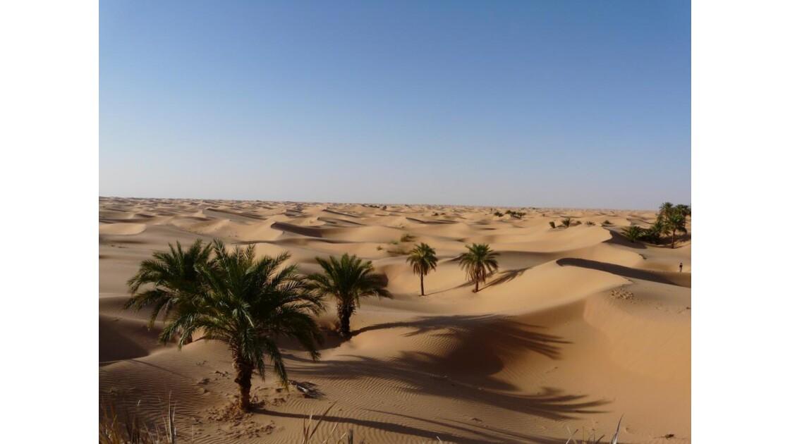 dunes et oasis