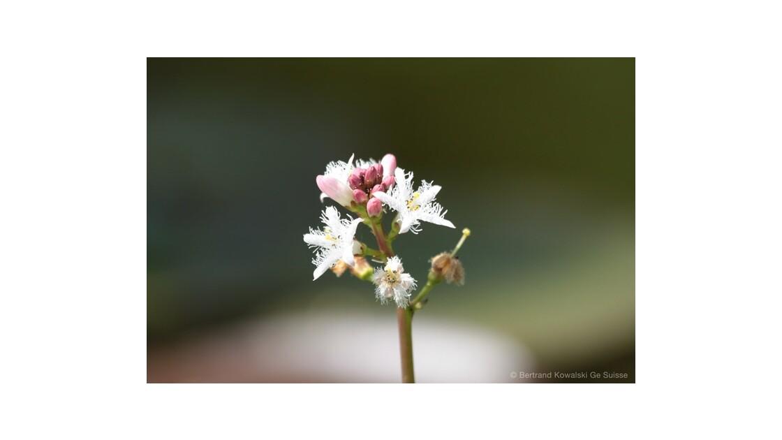 Fleurs_aquatiques.jpg