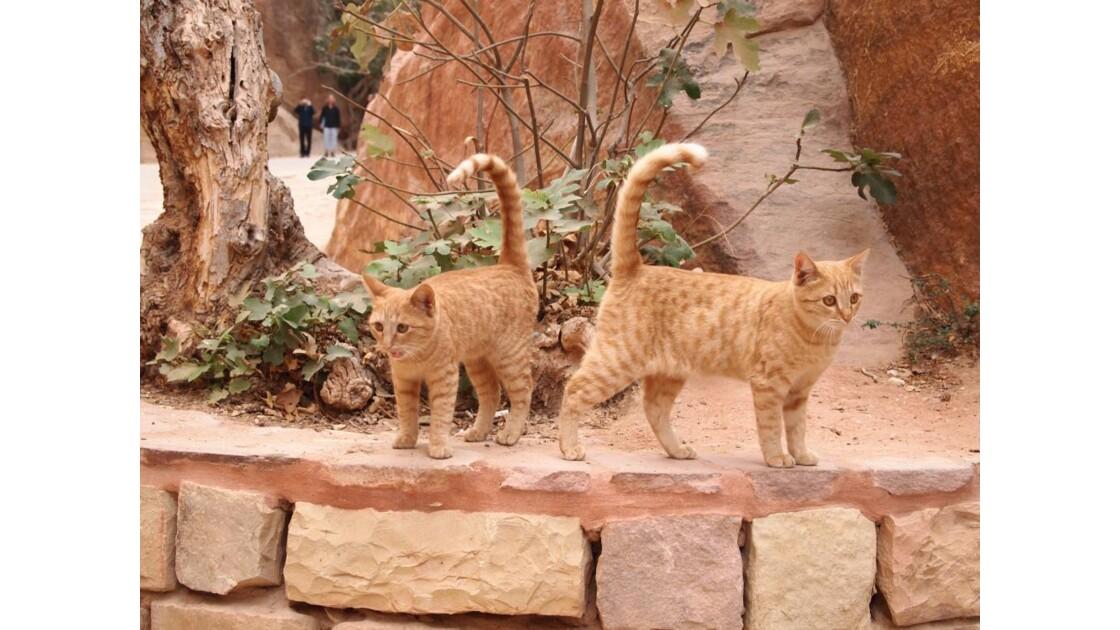les gardiens de Petra.jpg
