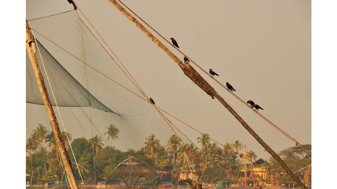 filets de pêche de Cochin 3
