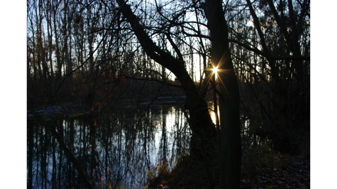 Coucher de soleil dans les arbres.