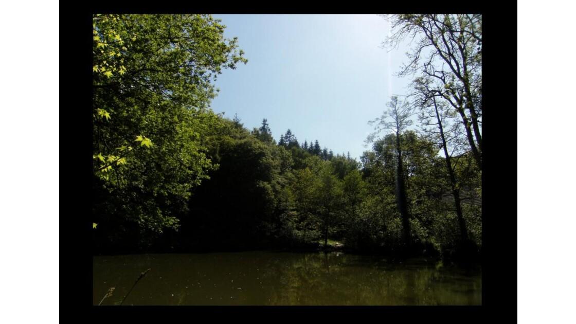 l'étang des cygnes blancs