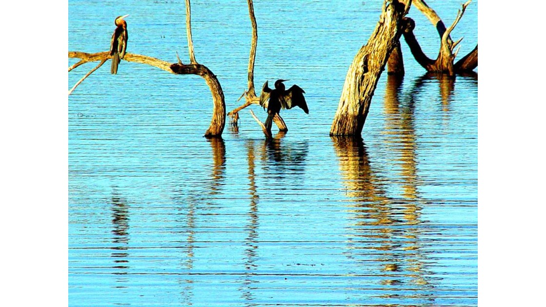 sur le lac du Pilanesberg