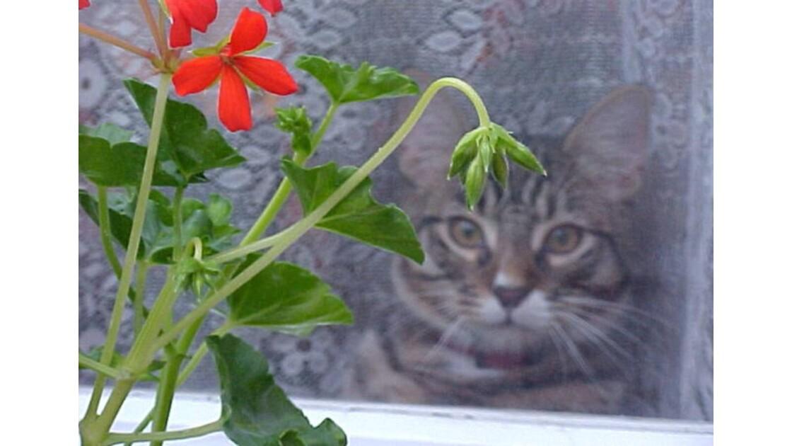 César derrière la fenêtre
