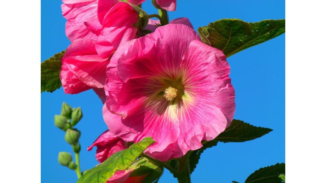 Flore du Jura