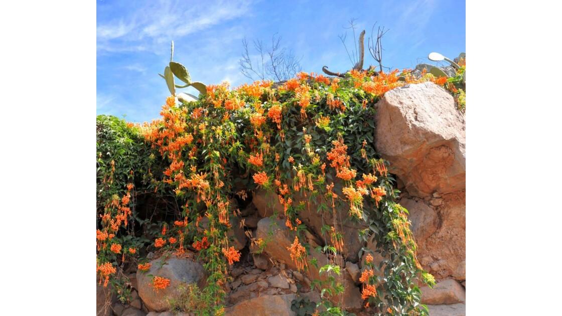 le mur fleurie