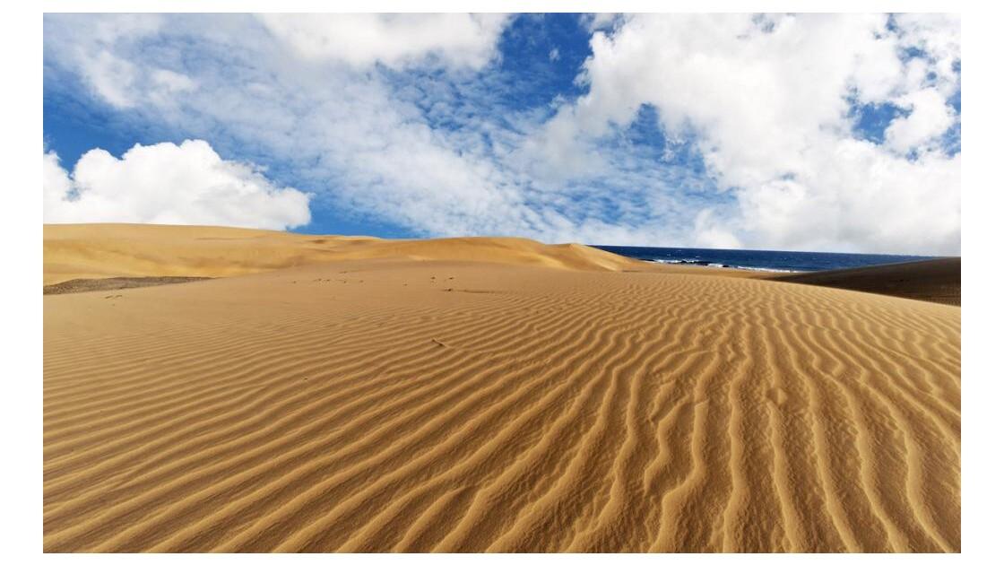 dune 4