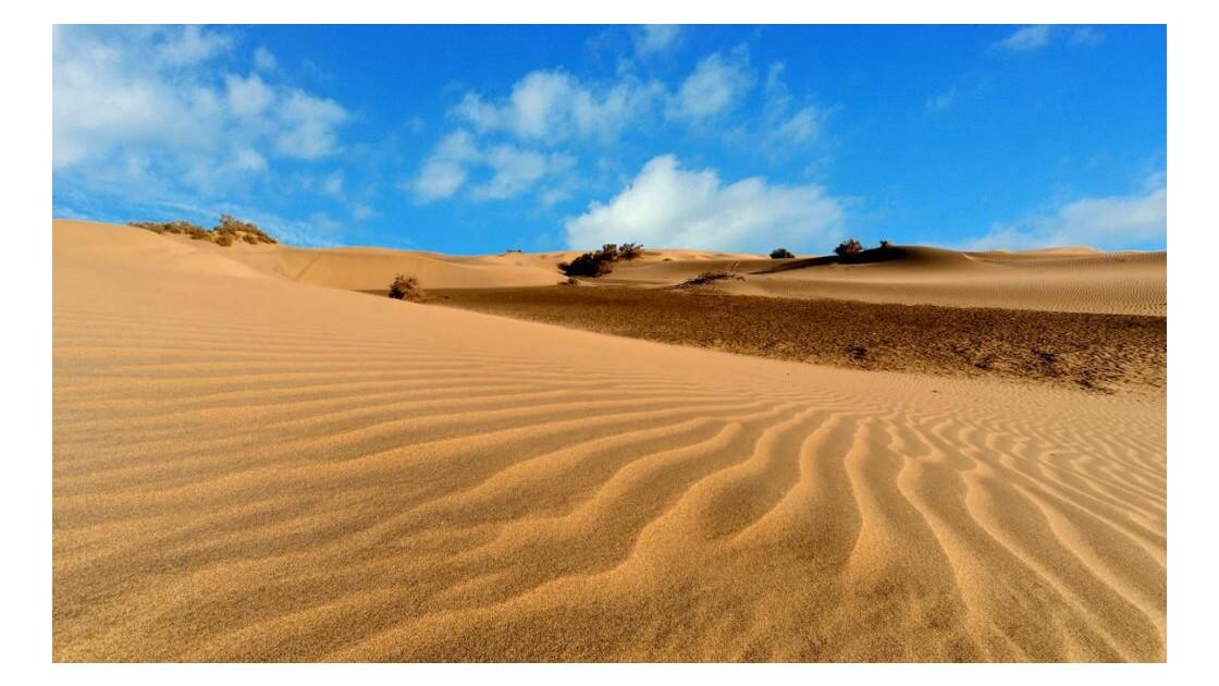 dune 6