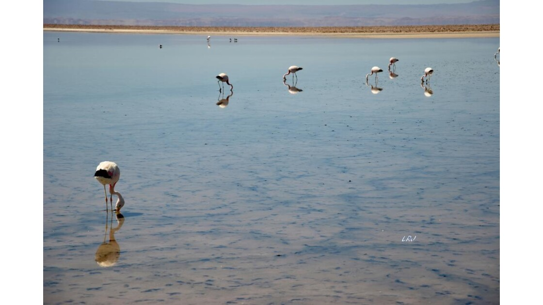 Salar d'Atacama.