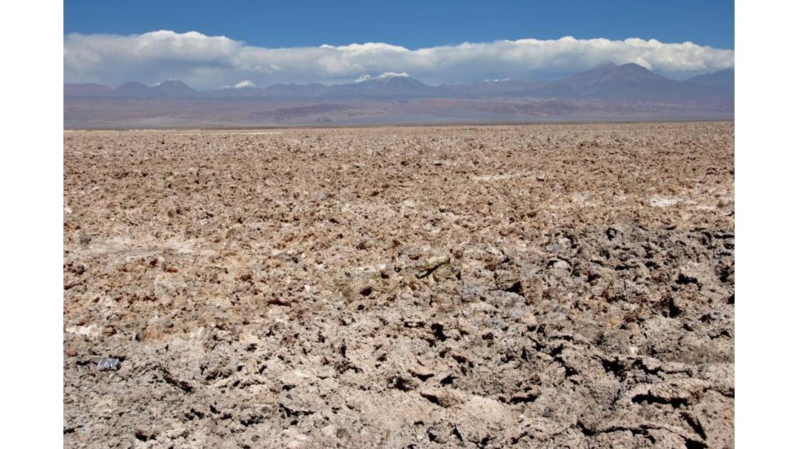 Le salar d'Atacama.