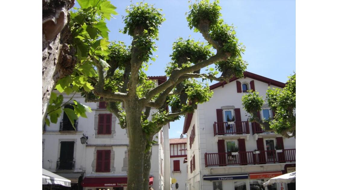 Belle façade et son arbre.