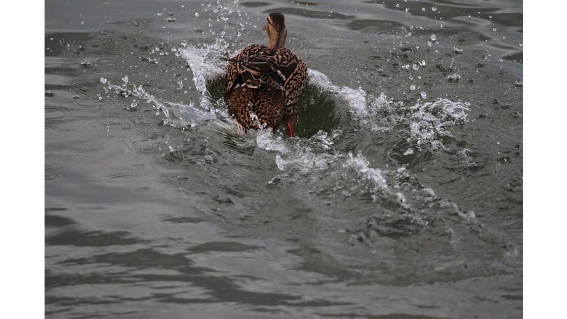 Quel plongeon !!!