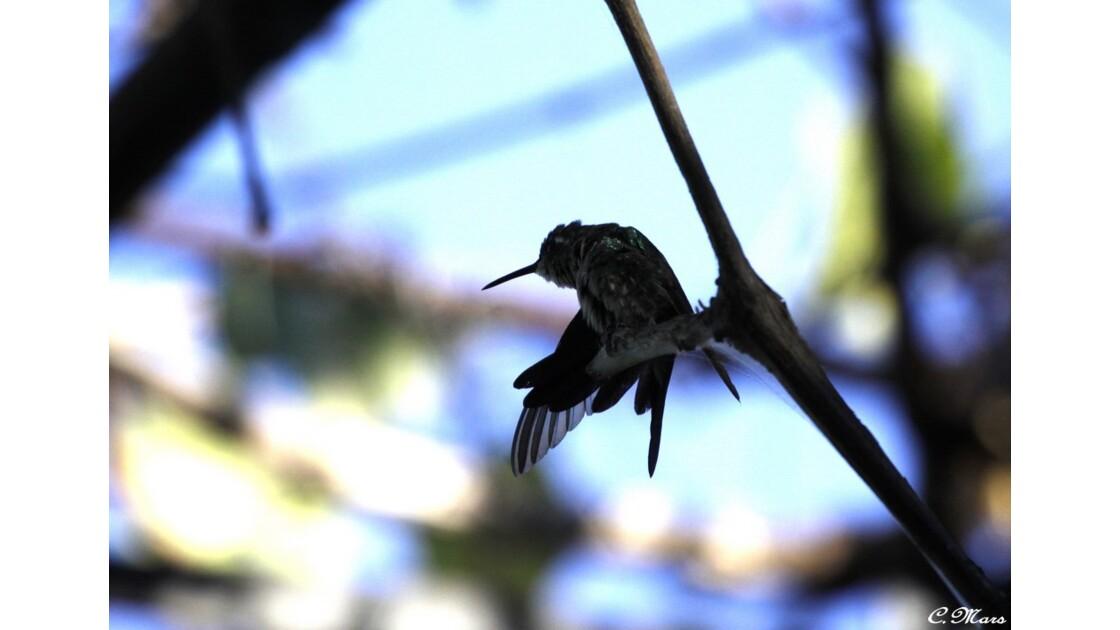 Importance du plumage