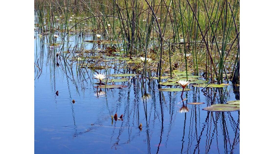 en Mokoro dans le delta del'Okavango1