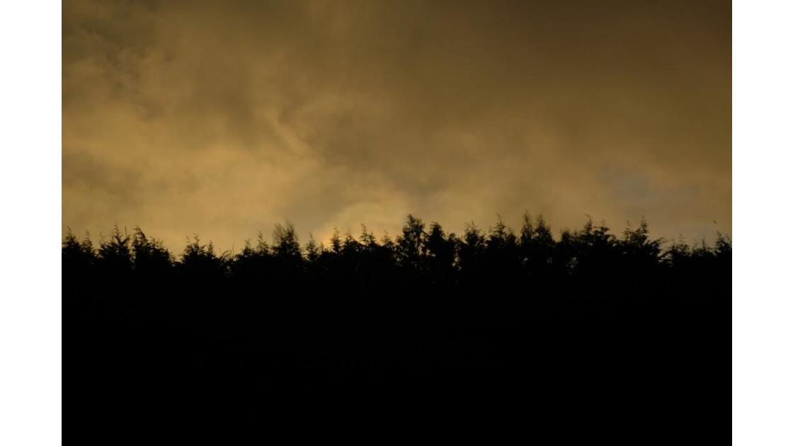 Arbre sous le coucher de soleil