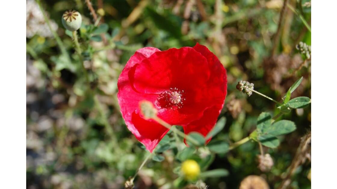 faune et flore de Roumanie