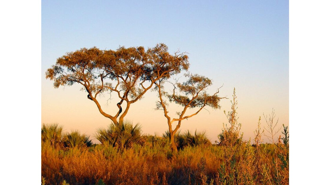 Safari àl'aube  Delta Okavango