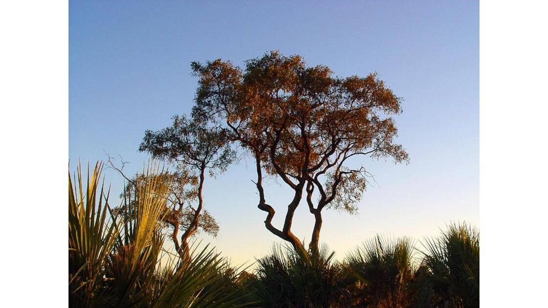 safari à pied à l'aube okavango