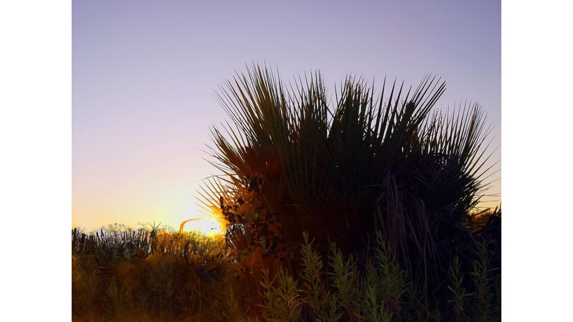 à l'aube dans delta Okavango