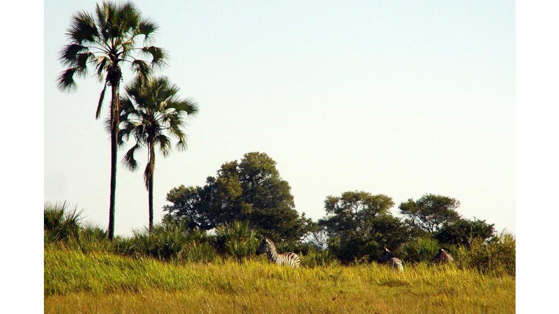 Delta de l'okavango......