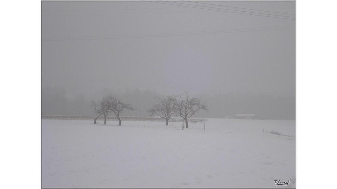 Brouillard.....