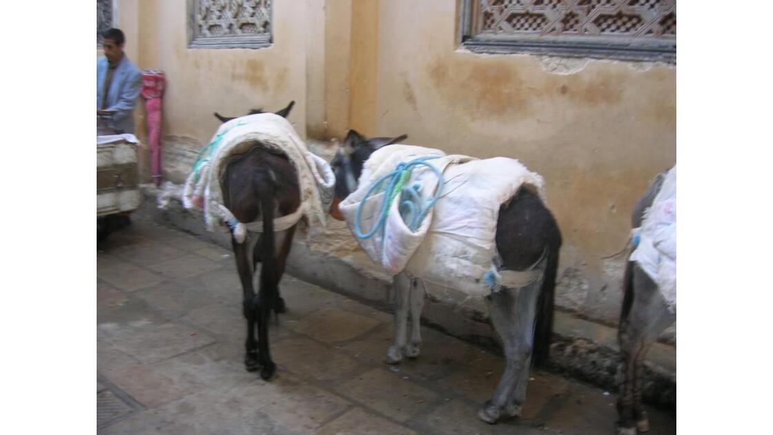 Maroc Fes la médina