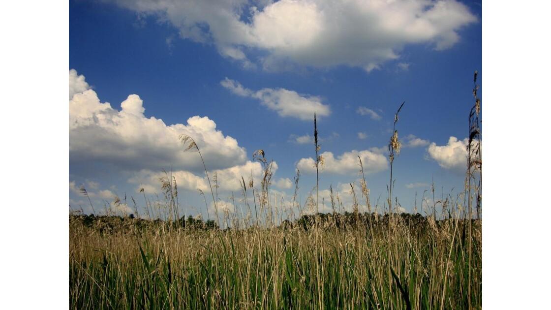 Les hautes herbes