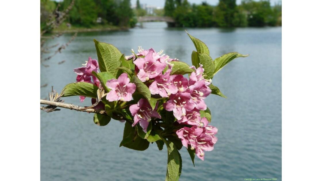 Poésie florale.JPG