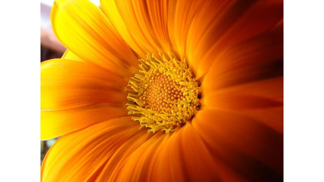 20090528_25A.jpg