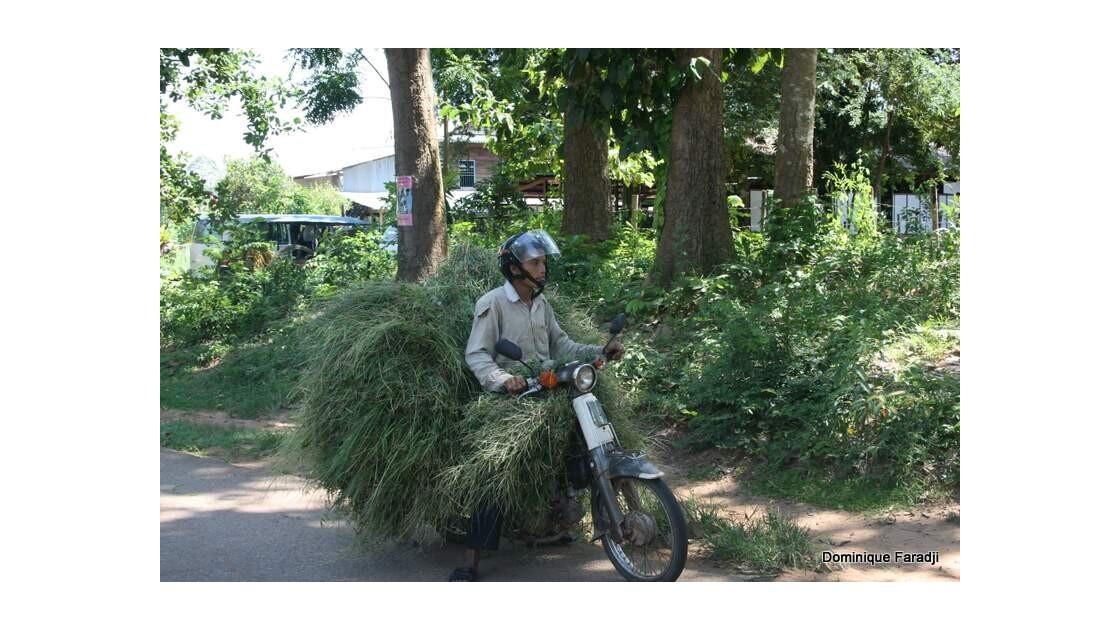 Transport Siem Reap