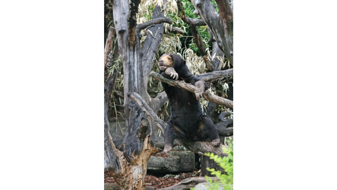Bâle - ours malais