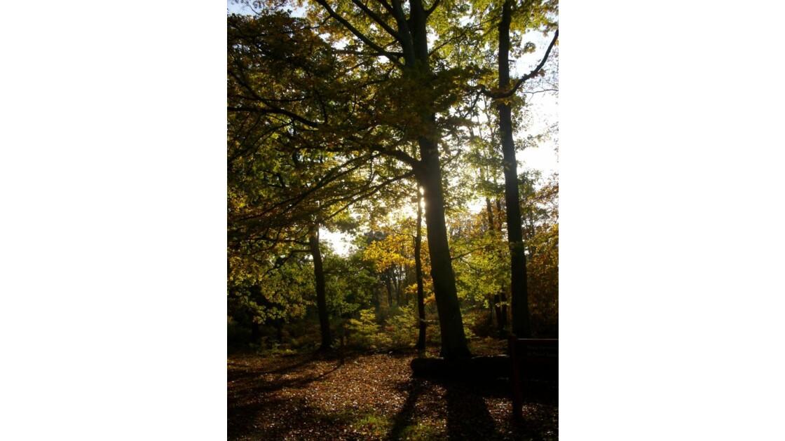 Forêt de Roumare.JPG