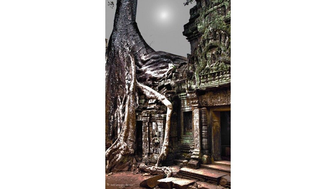 Temple de Ta Prohm au Cambodge