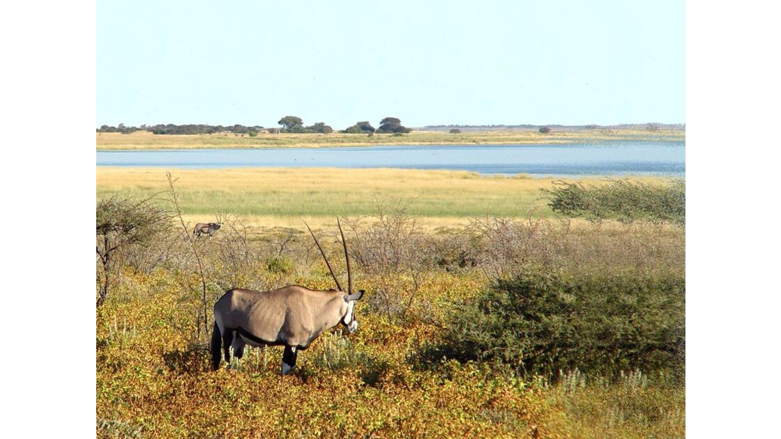 Parc national d'Etosha Oryx 1