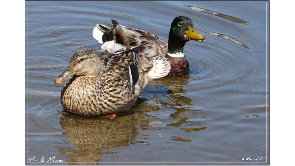 Couple canards