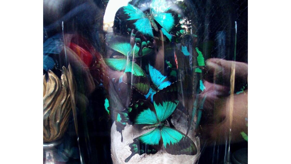 Effet Papillons