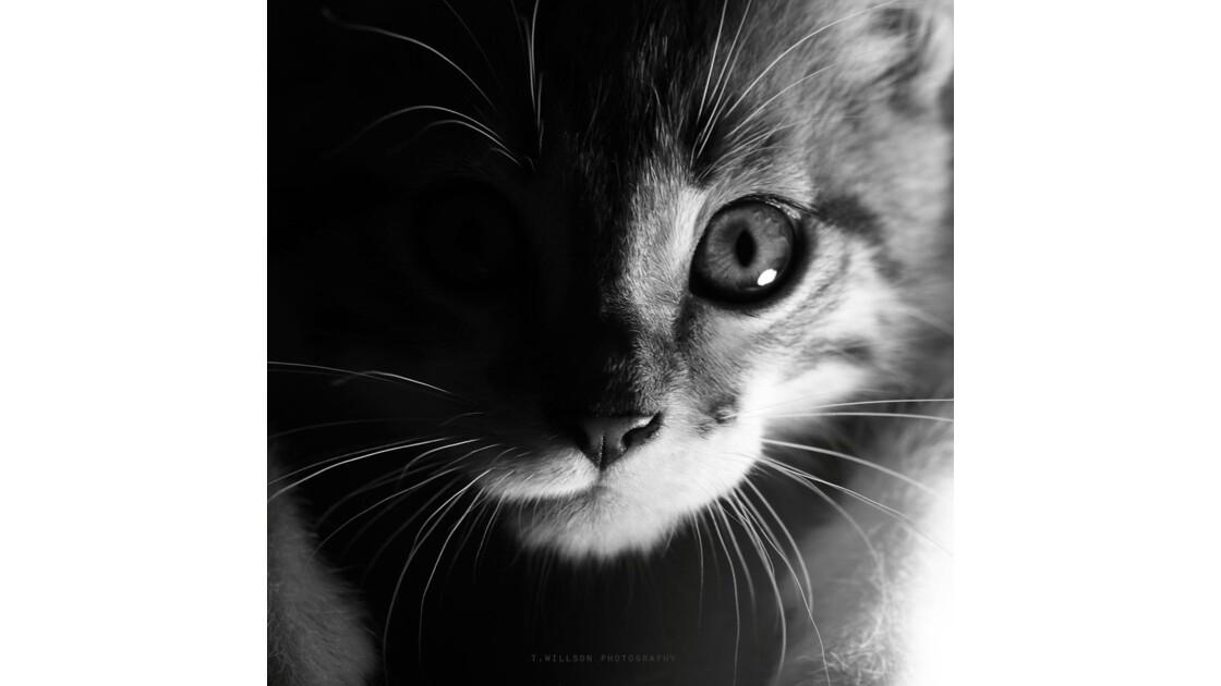 Je voudrais être chat : D