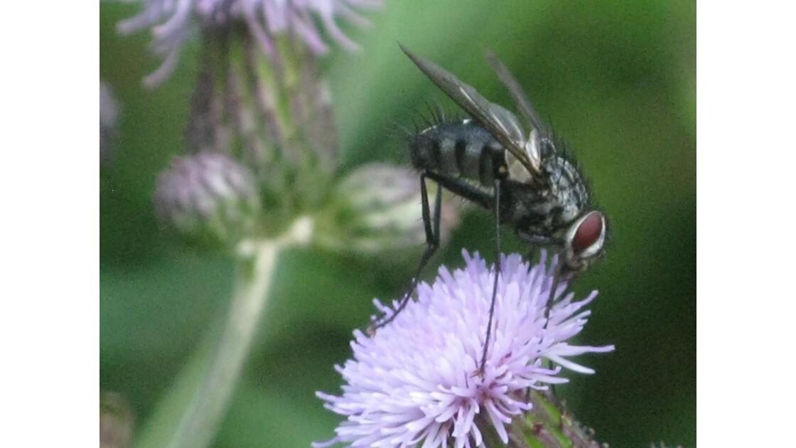 mouche et fleur