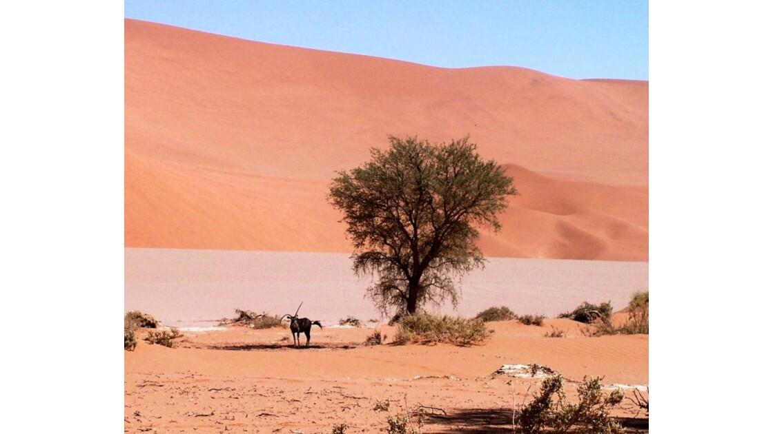 Antilope_Orynx_Namibie.jpg