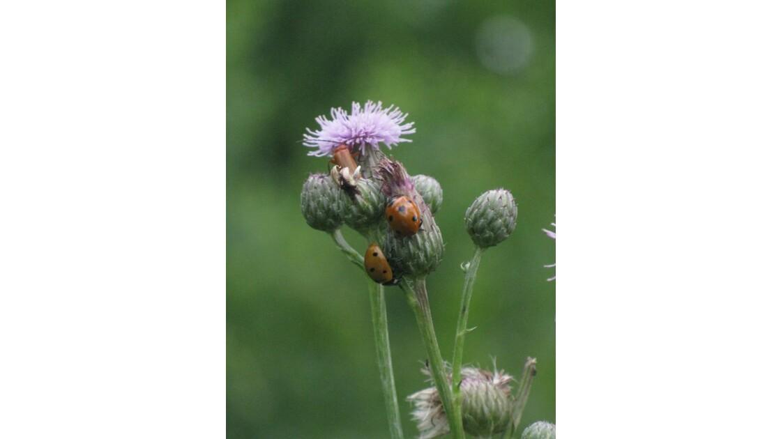fleurs + insectes