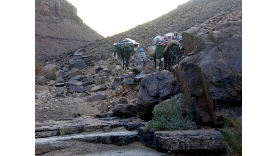 dromadaires escaladant le desert de pier