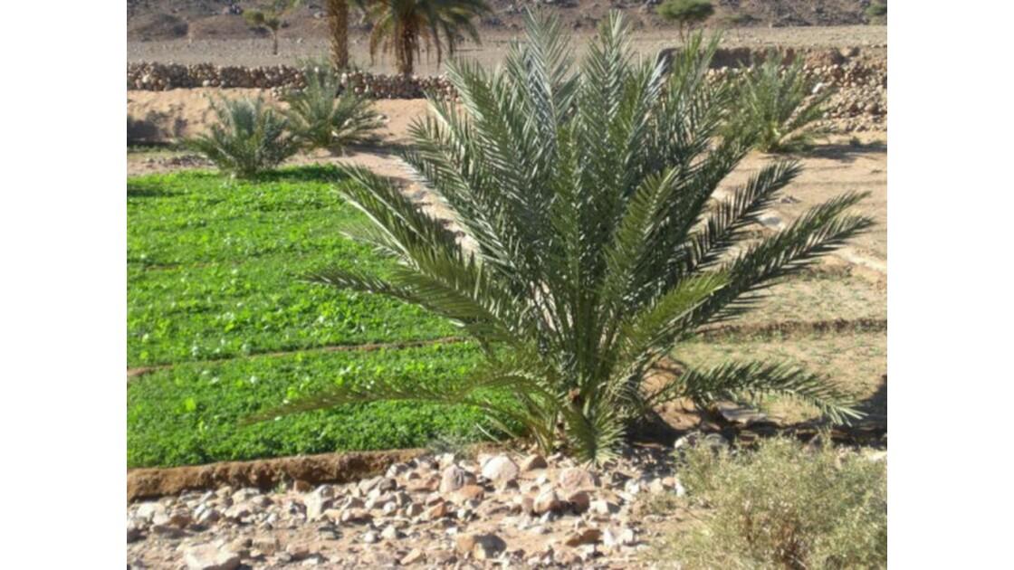 oasis de oued Naam