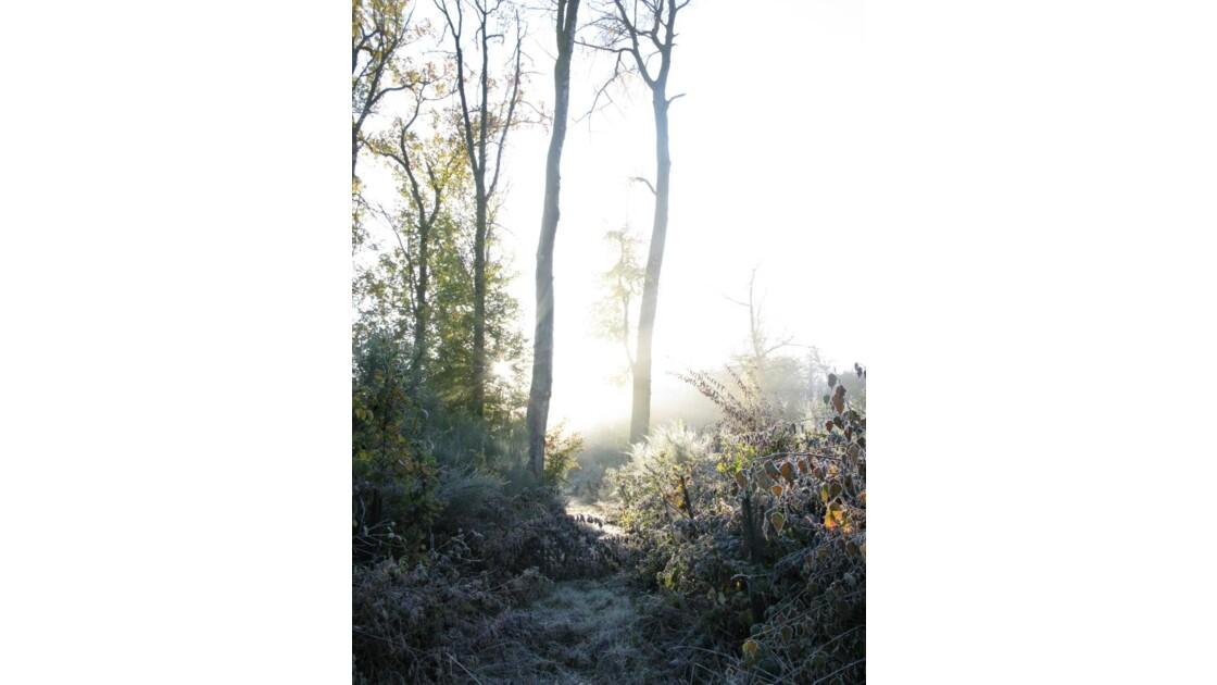 luminosité matinale