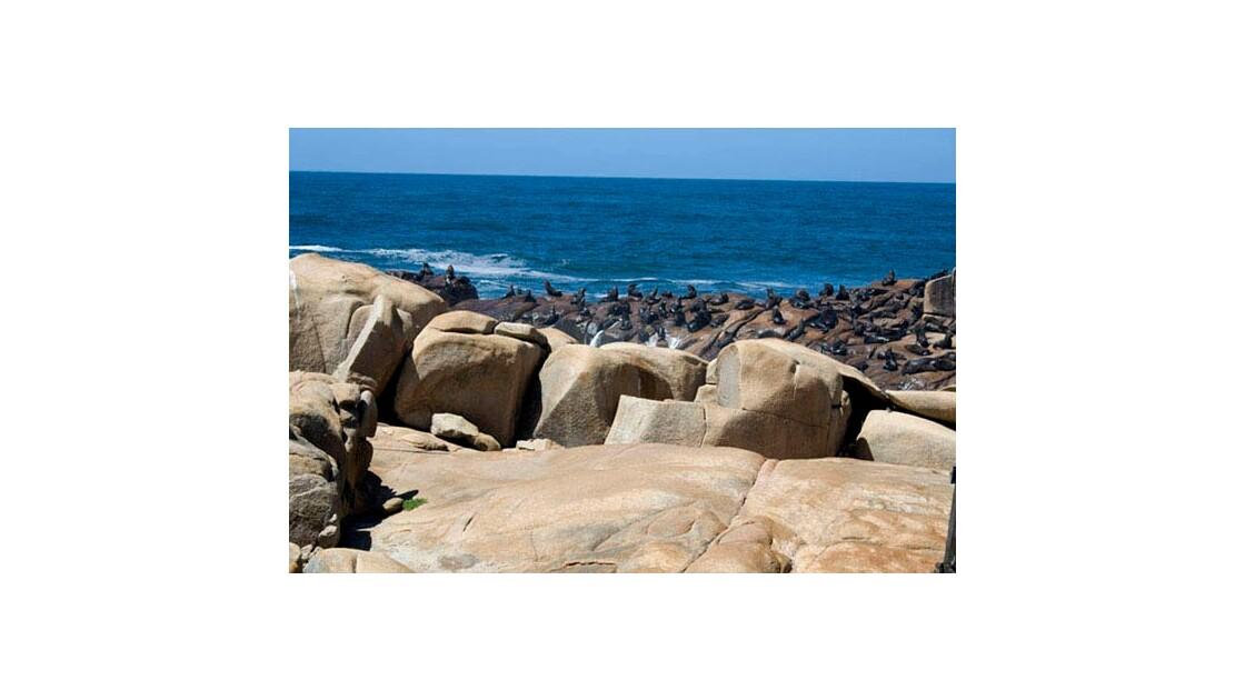 Sealions - Cabo Polonio